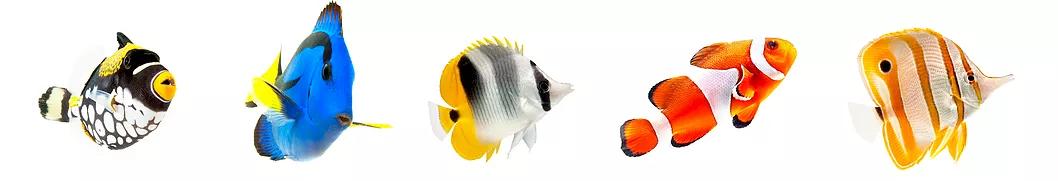 ocearis-poisson