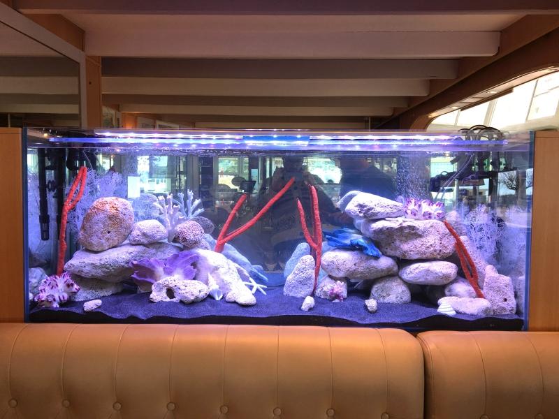 aquarium coraux