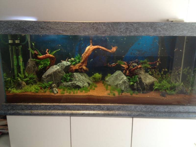 aquarium pierre