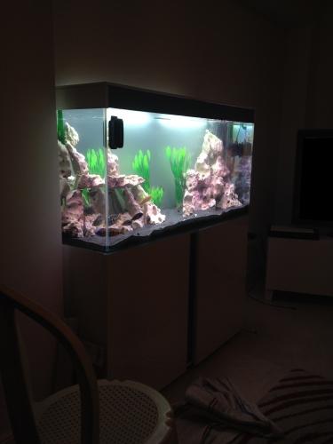 aquarium avec pierre