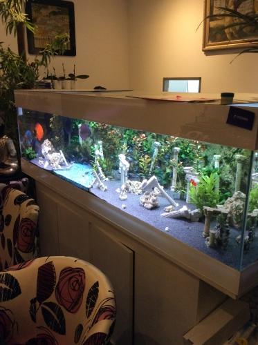 aquarium et décoration