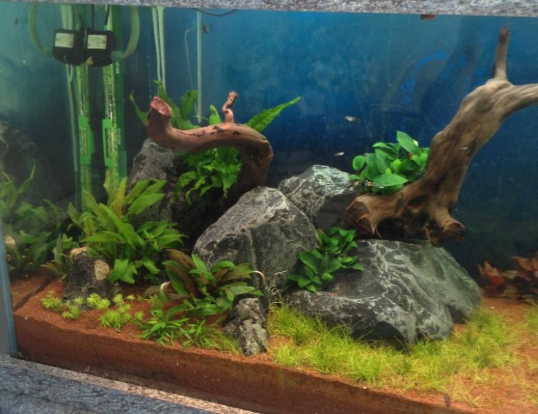 aquarium plante et bois