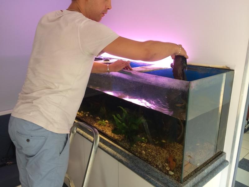 préparation aquarium bio